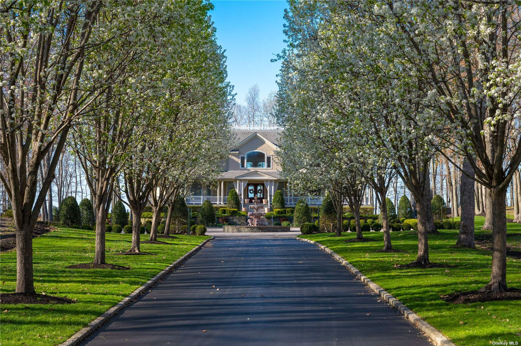 Flowering Pear Tree Driveway